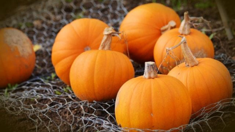 The History of Pumpkin Spice Lattes